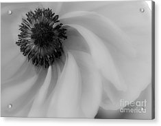 Orange Flower In Black And White Acrylic Print