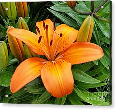 Acrylic Print featuring the photograph Orange Flower by Rose Wang
