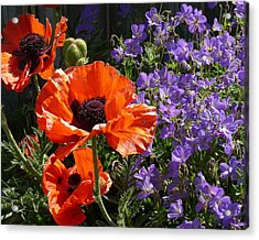 Acrylic Print featuring the photograph Orange Flowers by Alan Socolik