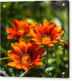 Acrylic Print featuring the photograph Orange Flowers by Jane Luxton