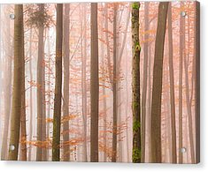 Orange Fog Acrylic Print