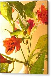 Orange Fresias Acrylic Print