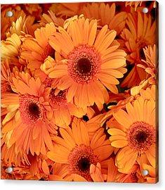 Orange Gerbera Daisies Acrylic Print by Art Block Collections