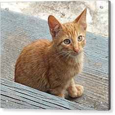 Orange Kitten 2 At The Front Porch Acrylic Print