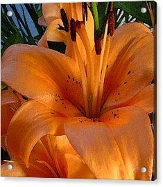 Orange Lily Acrylic Print by Stephen Prestek