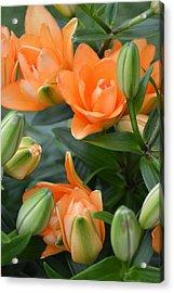 Orange Lily Acrylic Print