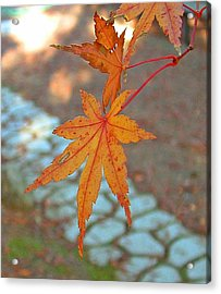 Orange Maple Leaves Acrylic Print by Lorna Hooper