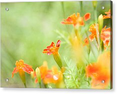 Orange Meadow Acrylic Print