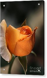 Acrylic Print featuring the photograph Orange Mood by Joy Watson