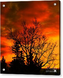 Orange Morning Acrylic Print by Marjorie Imbeau