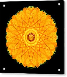 Acrylic Print featuring the photograph Orange Nasturtium Flower Mandala by David J Bookbinder