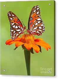 Orange On Orange Acrylic Print