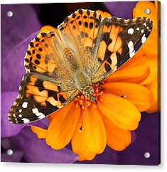 Orange On Purple Acrylic Print
