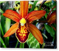 Acrylic Print featuring the photograph Orange Orchid by Kristine Merc