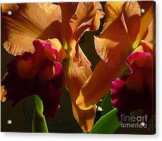 Orange Orchid Acrylic Print by Mukta Gupta