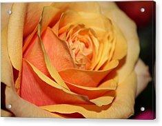 Acrylic Print featuring the photograph Orange Passion by Judy Palkimas