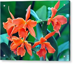 Orange Perfection Acrylic Print by Gail Butler