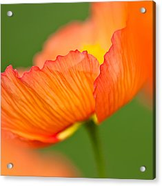 Orange Poppy Acrylic Print by Joan Herwig