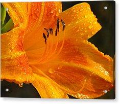 Orange Rain Acrylic Print by Karen Wiles