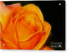 Orange Rose 6308 Acrylic Print by Gary Gingrich Galleries