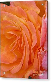 Orange Rose Swirl Acrylic Print by Paul Clinkunbroomer