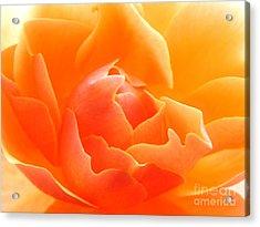 Orange Sherbet Acrylic Print by Deb Halloran