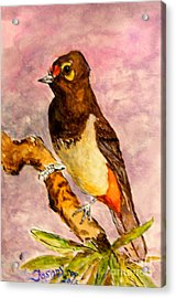 Acrylic Print featuring the painting Orange-spotted Bulbul by Jason Sentuf
