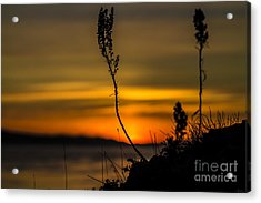 Orange Sunset Acrylic Print by Arlene Sundby