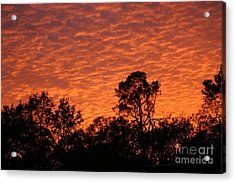 Orange Sunset Acrylic Print by D Wallace