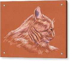 Orange Tabby Cat In Profile Acrylic Print by MM Anderson
