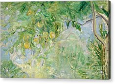 Orange Tree Branches Acrylic Print by Berthe Morisot