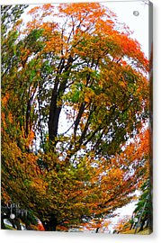 Orange Tree Swirl Acrylic Print by Glenn Feron