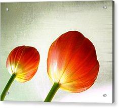 Orange Tulip Pops Acrylic Print by Julie Magers Soulen