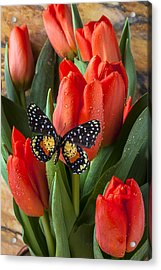 Orange Tulips And Butterfly Acrylic Print by Garry Gay