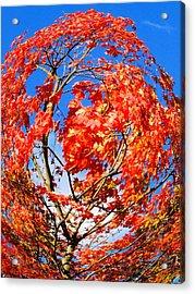 Orange Twirl -1 Acrylic Print