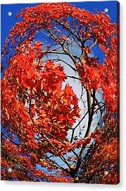 Orange Twirl -2 Twin Acrylic Print