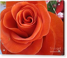 Orange Twist Rose 2 Acrylic Print