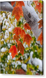 Acrylic Print featuring the photograph Orange White And Green by Ronda Kimbrow