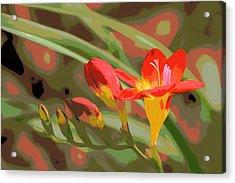Orange Yellow Freesia 1 Acrylic Print by Sheri McLeroy