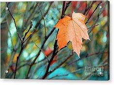 Orange You Gonna Fall Acrylic Print by Nina Silver