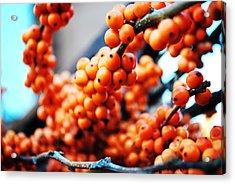 Oranges Acrylic Print by Charlie Gaddy
