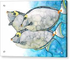 Orangespine Unicornfish Acrylic Print