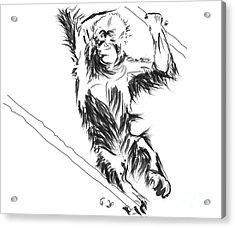 Orangutan 3 Acrylic Print