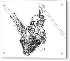 Orangutan Baby 2 Acrylic Print