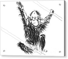 Orangutan Baby Acrylic Print