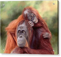 Orangutans Painting Acrylic Print by Rachel Stribbling