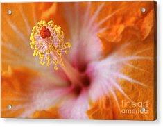 Orangy Goodness Acrylic Print by Peggy Hughes