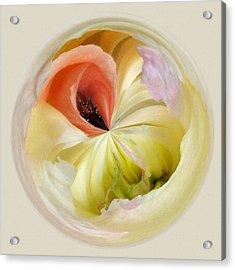 Orb 4... Poppy Meets Peony Acrylic Print