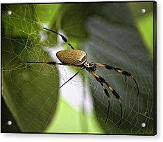Orb Spider 2 Acrylic Print by Lynn Andrews