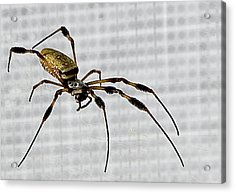 Orb Spider 4 Acrylic Print by Lynn Andrews
